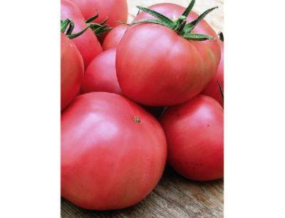 сорт томата алтайский шедевр