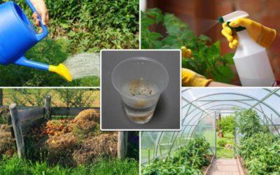 как избавиться от молочая на огороде