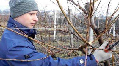 как укрыть молодые плодовые деревья на зиму