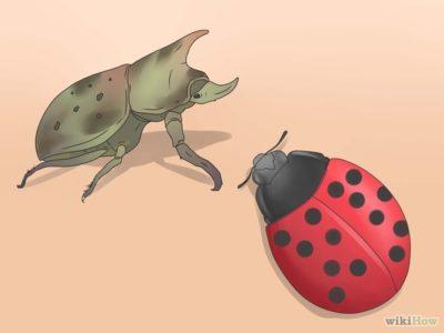 как избавиться от жуков на картошке