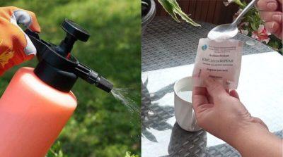 полив огурцов пищевой содой