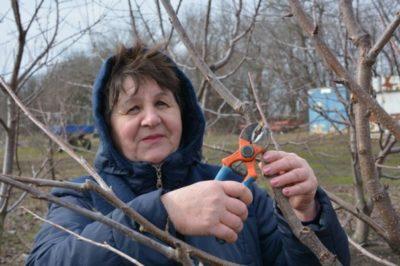 опрыскивание персика ранней весной