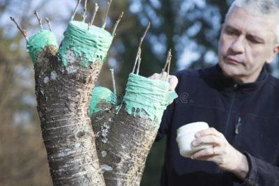 удобрения для саженцев плодовых деревьев