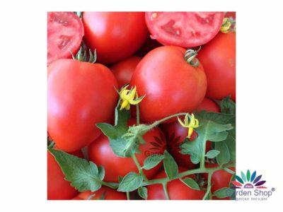 как поливать семена помидор