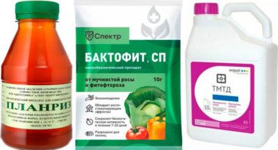 препараты от болезней огурцов