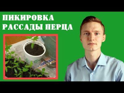 пикирование перца болгарского
