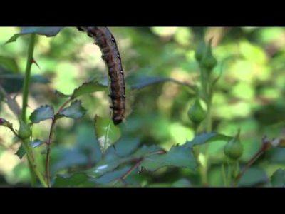 гусеницы на яблоне как бороться