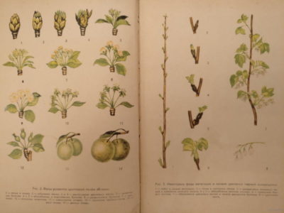 обработка яблонь весной от болезней и вредителей