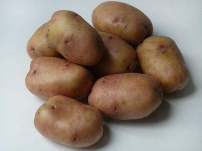 картофель сударыня описание сорта