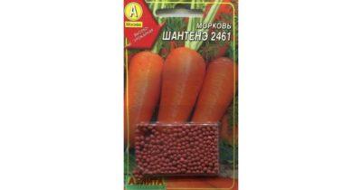 не всходит морковь что делать