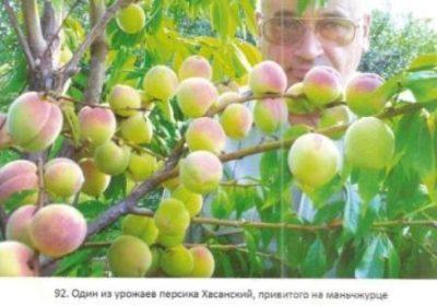 чем подкармливать саженцы плодовых деревьев