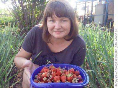 уход за садовой земляникой после плодоношения