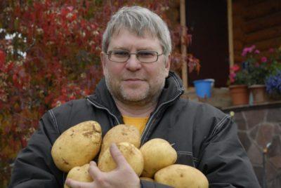 если картошку не окучивать что будет