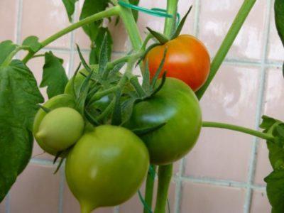нужно ли пасынковать помидоры черри