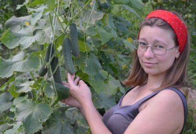 чем обработать смородину после сбора урожая от болезней