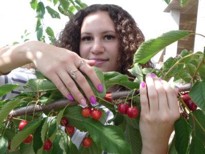 удобрение черешни осенью