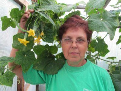 желтеют листья у огурцов что делать чем обработать