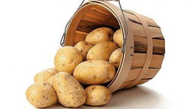чем обработать картофель перед закладкой на хранение
