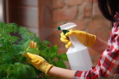 как поливать капусту уксусом
