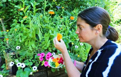 календула выращивание из семян когда сажать