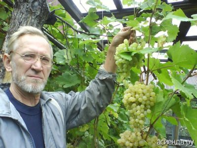 как хранить виноград в погребе