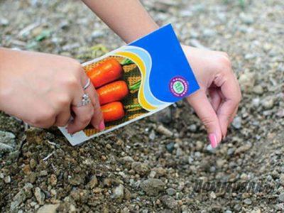 посадка моркови под зиму в подмосковье