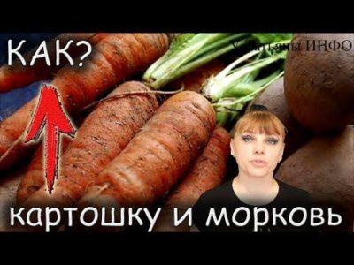 при какой температуре хранить морковь