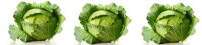 можно ли заморозить белокочанную капусту