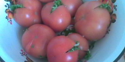 помидоры соленые с сельдереем
