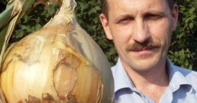 лук эксибишен выращивание из семян
