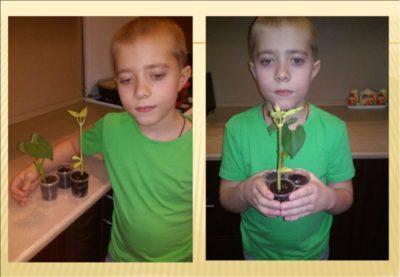 как посадить проросшую фасоль