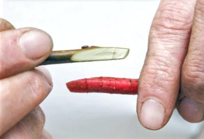 прививка в расщеп яблони