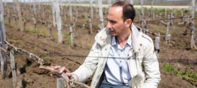 уход за виноградом весной в ростовской области