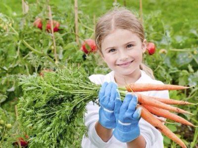 уход за морковью в августе