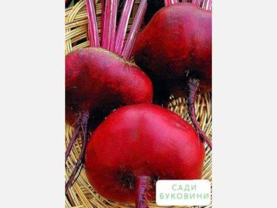 как замочить семена свеклы