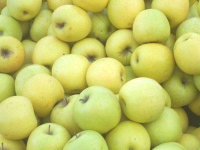 сорт яблок грушовка