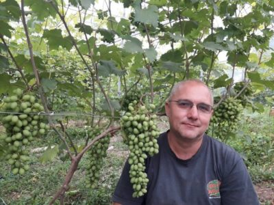 виноград в подмосковье посадка и уход