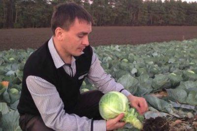 как поливать рассаду капусты