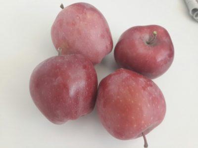 яблоня моди описание сорта